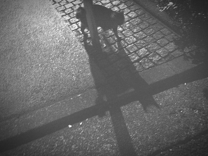 野良猫 Stray Cat キジトラ 走り猫 夜ねこ なんとなく..... ねこ影