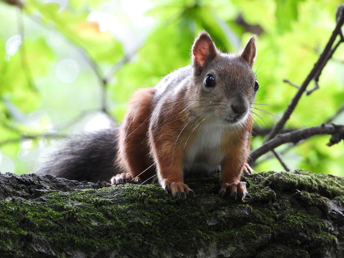 Close-up portrait of a squirrel on rock