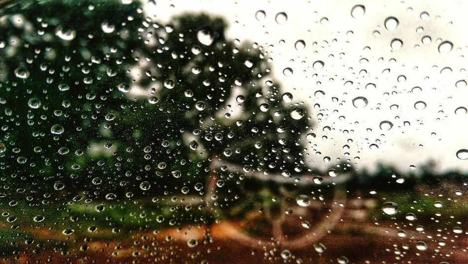 Rainy Water Backgrounds Tree Defocused RainDrop Full Frame Drop Window Wet Glass - Material Water Drop Droplet Monsoon Rainy Season Rain Condensation Rainfall Glass Torrential Rain Detail