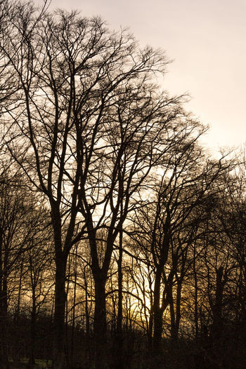 Trees with last rays of setting sun, Whitlingham Country Park Norwich Whitlingham Country Park Bare Tree Beauty In Nature Branch Day Forest Landscape Nature No People Outdoors Scenics Silhouette Sky Sunset Travel Destinations Tree