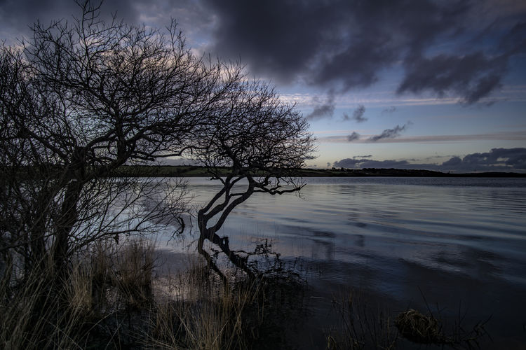Trees along the Lake. Lake Lake View Calm Stillwater Calm Water #branches Tree Trees #landscape #water #dusk #landscapes #horizon #sky #bluesky #dramaticsky #longgrass Water Reflection Sky Cloud - Sky Nature Sea Outdoors Beauty In Nature Sunset Night Horizon Over Water Tree No People