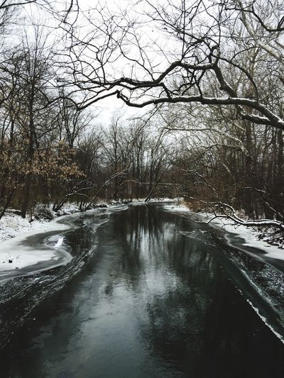 Nature Nature Is My Best Friend Beauty In Nature Tree Snow Water Bare Tree Tranquility Tranquil Scene Cold Temperature Scenics No People Tadaa Community Winter Outdoors Sky Day River Nature Photography From My Point Of View