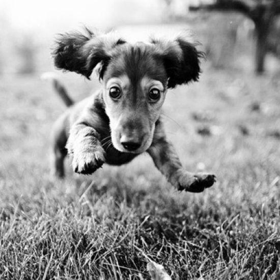 собачка маленькая собачка