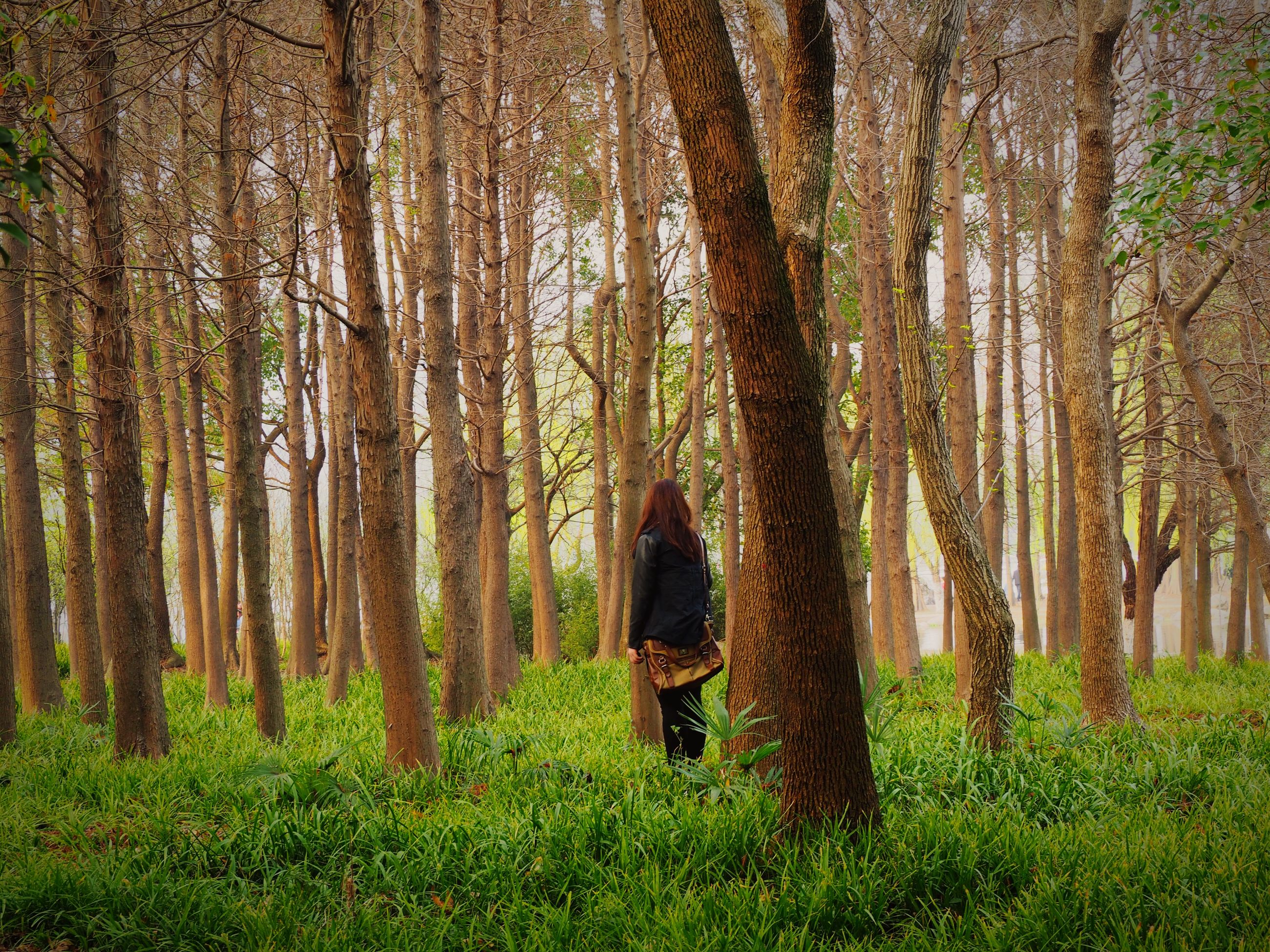 tree, grass, growth, lifestyles, tree trunk, green color, leisure activity, rear view, tranquility, nature, men, forest, field, full length, standing, person, tranquil scene, grassy