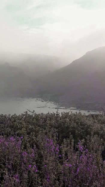 Sea mist over cliff side Flower Beauty In Nature Nature Fog Outdoors Tranquility Tranquil Scene Sunlight Plant Mountain Grass Water Fragility Rural Scene Foggy Weather Foggymorning Seafog Mist Seamist Purple Flower Shoreline