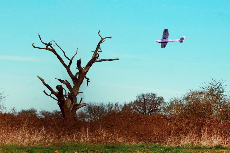 Tree Nature Branch Bare Tree Outdoors Landscape Airplane Sky No People Day Drone  Light Aircraft Dead Tree Canal
