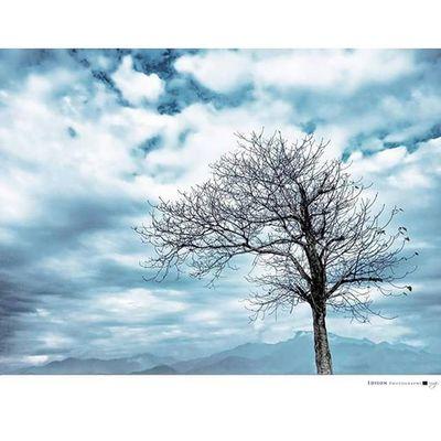 【 靜 】 我愛寧靜。 Mi3 手機攝影 Tree Quiet 365Snap