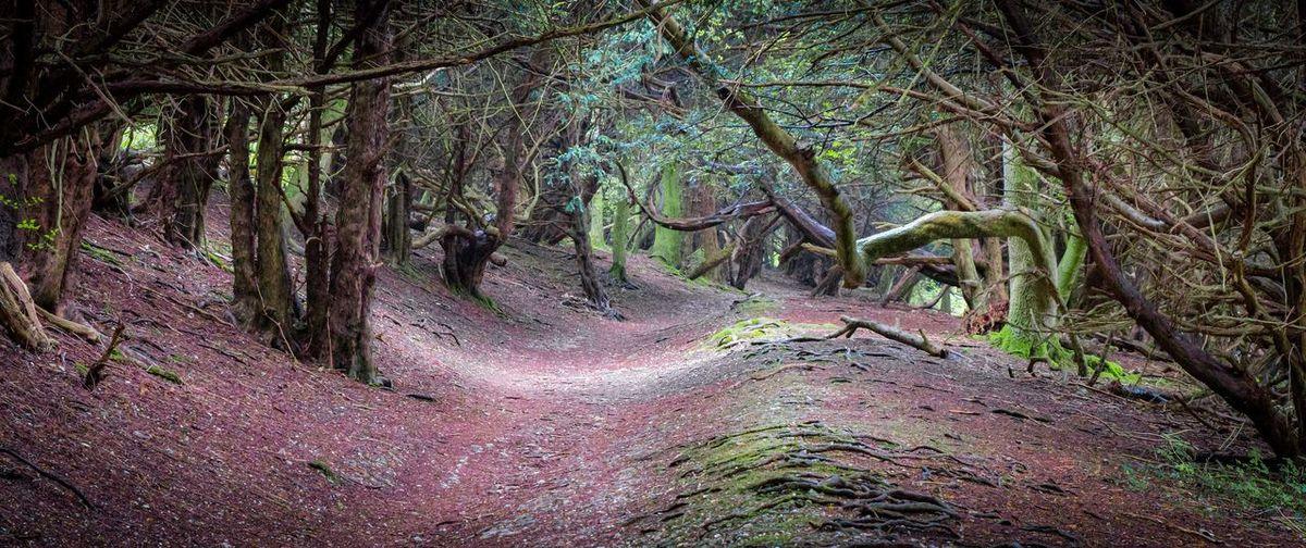 The old ways, ancient paths in the forest Tree Plant Forest Land Growth Tranquility Beauty In Nature Nature Tree Trunk Trunk No People WoodLand Day Non-urban Scene Tranquil Scene Branch Scenics - Nature Outdoors Root Environment