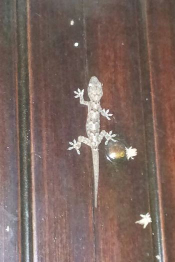 (this one was on Our Inn's door) Goodnight Dear Friends. a Wonderful Sunday t☆☆!!! (all pics here are with Samsung S2 ...We left the Camera cables home...:-( :-( :-(. ) photos from Rio will come Later. Colors Of Brasil Photos That Weshare With Friends