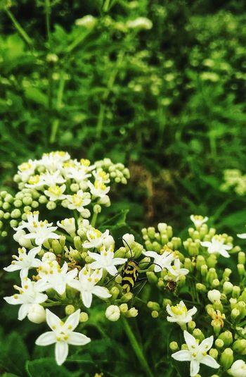 Green White EyeEm Nature Lover EyeEm Best Shots Bee Flower Day Nature Garden Flower Flower Head Leaf Close-up Plant Green Color In Bloom Flowering Plant Petal Botanical Garden Botany Plant Life Blooming Blossom Pollen Single Flower
