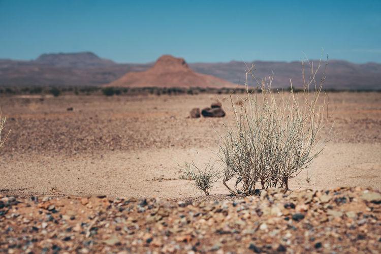 Dried plants on desert against sky