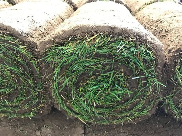 Garden Photography Nature Full Frame Plant Soil High Angle View No People Gardening Garden Outdoors Bale  Grass Bale Earth Agriculture Stack Laying Greensward Grass Rolled Sod SOD Green Color Growth Freshness Working Turf