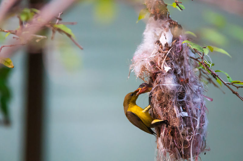 Close-up of birds hanging on plant