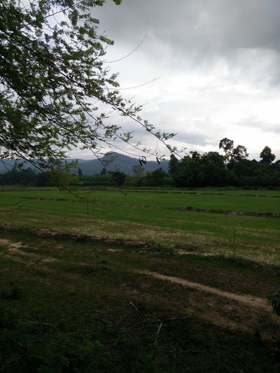Nature view Sky Cloud - Sky Tree Plant Environment Landscape Land Field Tranquility Tranquil Scene Beauty In Nature Nature Scenics - Nature Grass Growth No People Day Non-urban Scene Rural Scene Outdoors