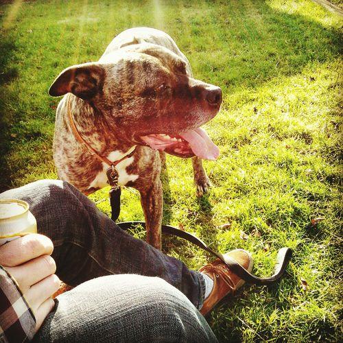 Tankdiesel Hippielife Streetlife KickinrocksHippiegrrl Earth Dogslife Seattle