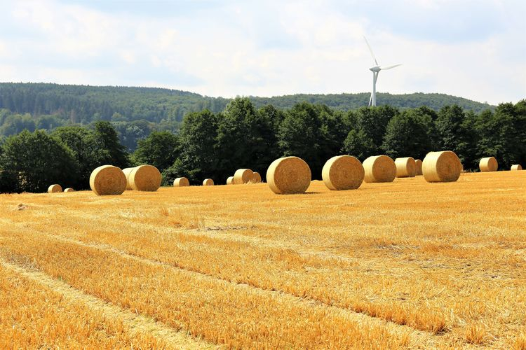 Harvesting Rolled Up Tranquility No People Outdoors Tranquil Scene Nature Field Rural Scene Land Agriculture Plant Environment Hay Bale  Farm Landscape Tree Day Sky Scenics - Nature Beauty In Nature