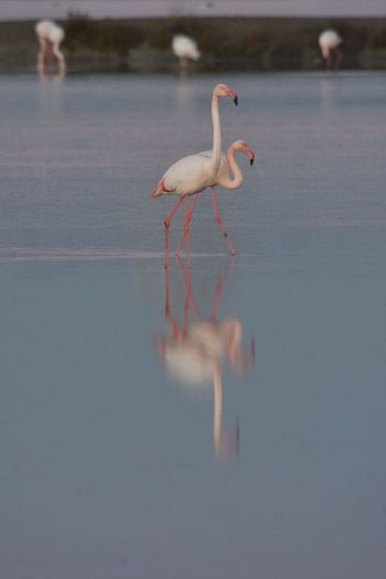 Reflection Outdoors Water No People Flamingo Nature Animals In The Wild Orange Color Scenics