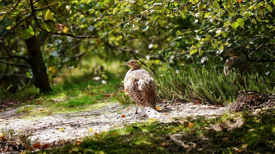 Bird perching against tree
