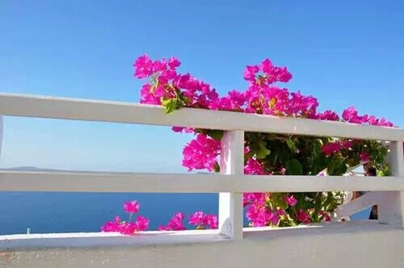 Sea View Enjoying Life Flower&beauty