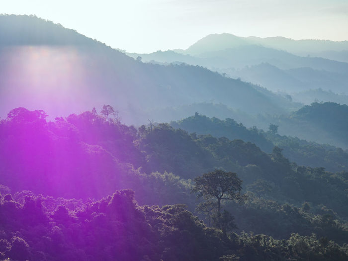 Beautiful landscape nature of rain forest and mountain. abundance evergreen forest