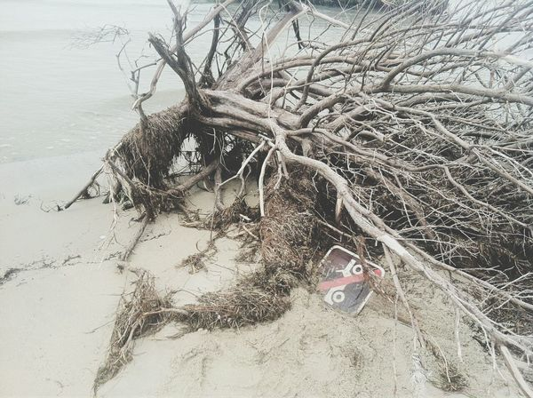 Tree No Vehicles Beech Shoreline Deadtree