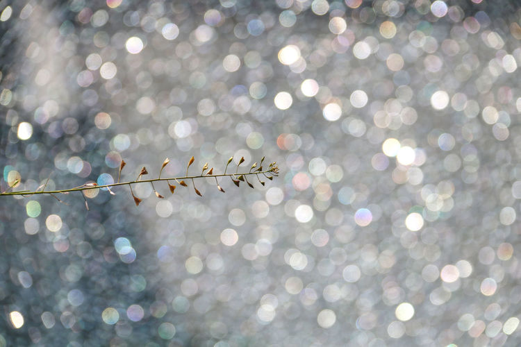 Background Defocus Background Texture Backgrounds Beauty In Nature Bokeh Lights Bright Celebration Day Decoration Defocused Illuminated Lens Flare Light Light - Natural Phenomenon Nature No People Outdoors Plant Shiny Spotted Sunlight