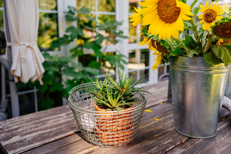 Close-up of potted plants in basket on table