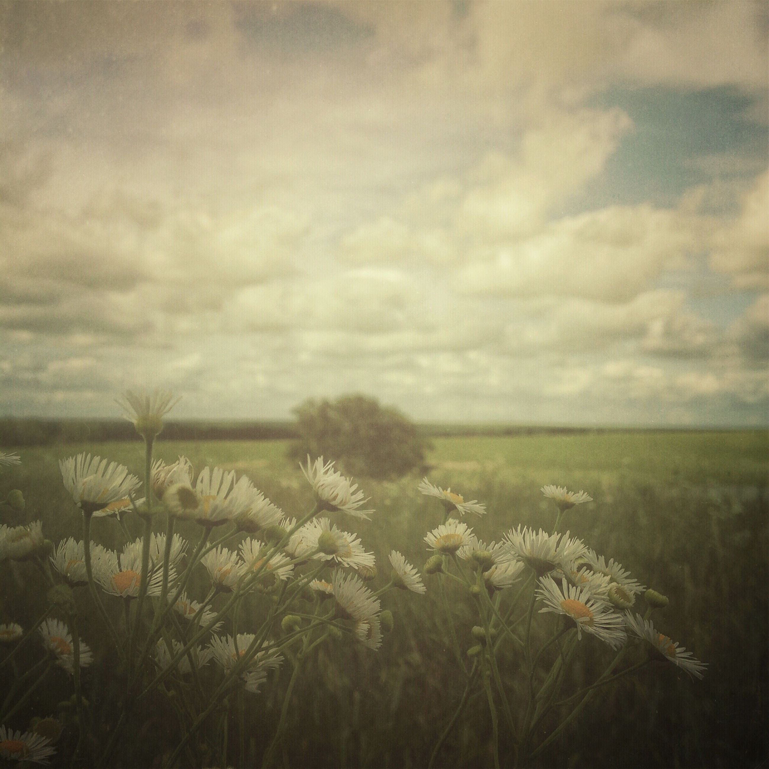 flower, sky, growth, beauty in nature, field, cloud - sky, plant, nature, tranquil scene, tranquility, landscape, cloudy, freshness, scenics, cloud, fragility, day, outdoors, no people, stem