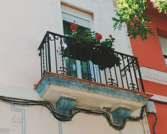 Window Architecture Built Structure No People Indoors  Day Flower Rosé Balcony City Low Angle View Street Streetphotography Red Petal The Street Photographer - 2017 EyeEm Awards The Architect - 2017 EyeEm Awards