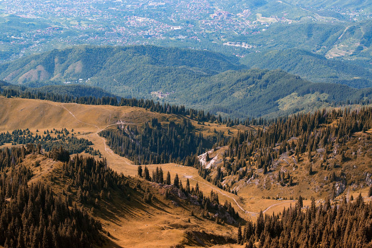 Aerial View Of Pine Trees On Landscape