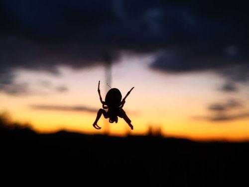 Pók esti fényben.