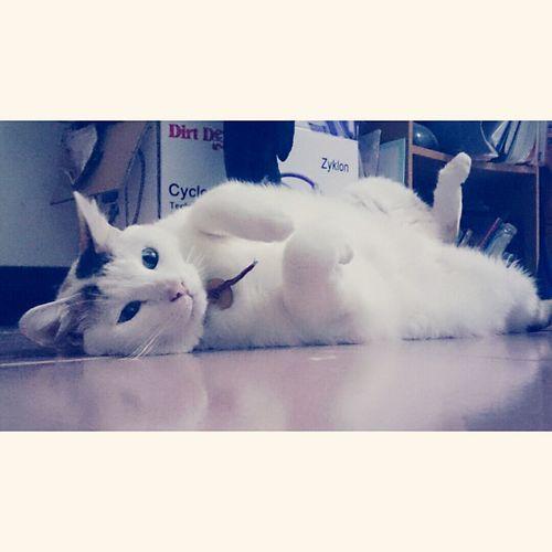 Cat Lover 愛死妳了小寶貝