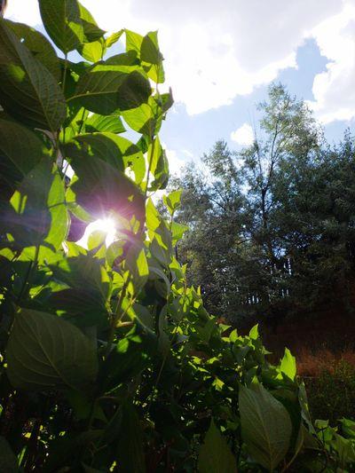 Sunny day Tree Leaf Sunlight Sun Branch Lens Flare Sunbeam Sky Close-up Growing Plant Life