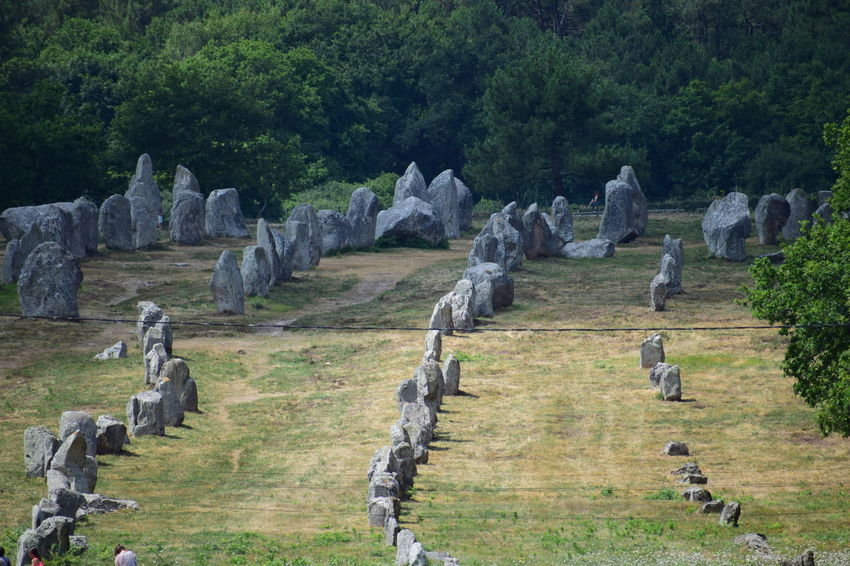 Menhir, ancient ruins Animal Animal Themes Animal Wildlife Animals In The Wild Architecture Bird Day Flock Of Birds Grass Green Color Group Of Animals In A Row Land Large Group Of Animals Nature No People Outdoors Plant Rock Solid Tree Vertebrate