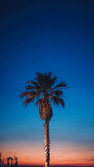 Low angle view of coconut palm tree against sky during sunset
