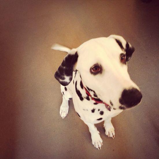 Office Dog