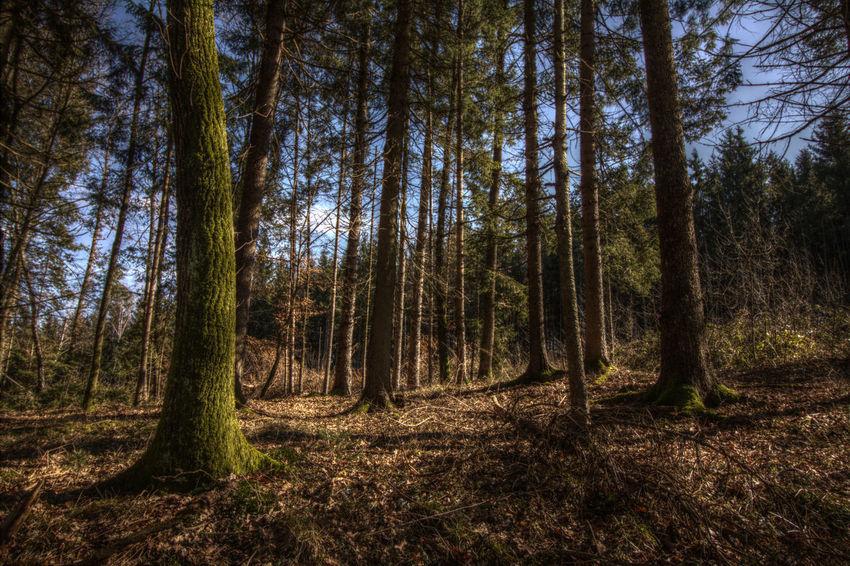 Climate Change Forest HDR Hdr_Collection Winter End Wood Forest WoodLand Protecting Where We Play Landscape With Whitewall The Great Outdoors With Adobe The Great Outdoors - 2016 EyeEm Awards Nature's Diversities Perspectives On Nature