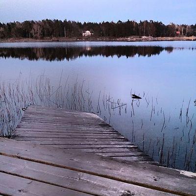 Norrtelje Sweden Wildlife Ig_sweden sea fjord nature beauty igsweden swed igerssweden igsweden scandinavia scandinavian svenska sverige vätö