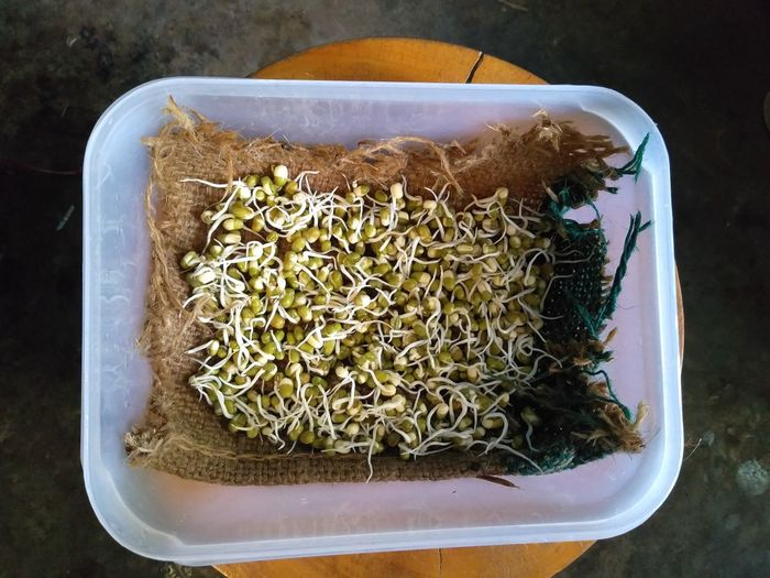 Directly above shot of mung beans in container