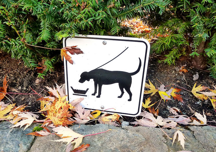 Dispensers Dog Drinking Place Dogs Water Fountains Fountain Sign Water Cooler Water Dispensers Water Fountain