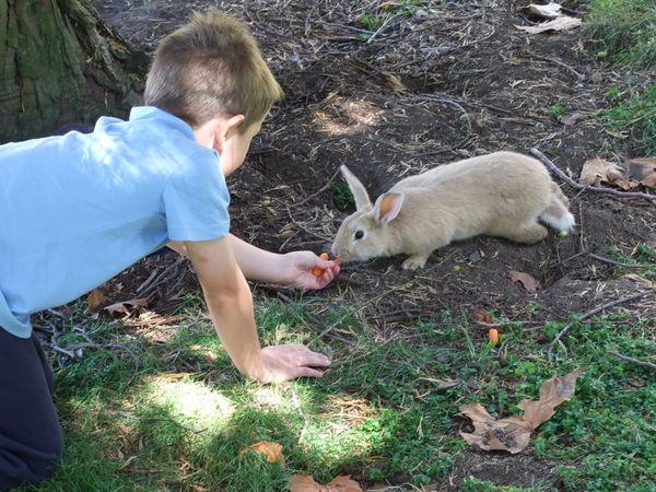 Rabbit Feeding Animals Child Photography Wildlife Photography