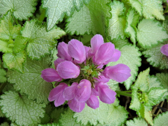 Purple And Green Flowering Plants Plant Beauty In Nature Leaf Plant Part Freshness Flower Growth Flowering Plant Close-up Nature Fragility Vulnerability  Green Color Pink Color No People Day Outdoors Petal Inflorescence Flower Head Purple