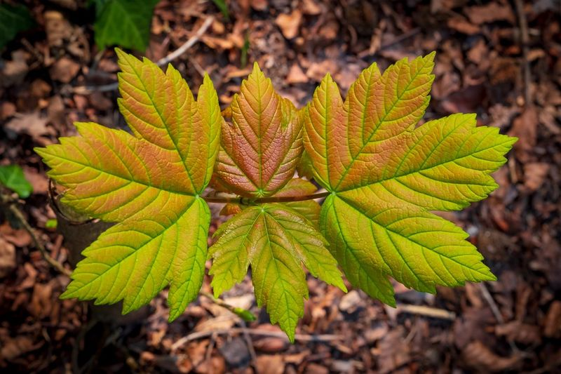 Leaf Plant Part Green Color Plant Nature Close-up Growth Day Beauty In Nature Land No People Focus On Foreground Outdoors High Angle View Freshness Pattern