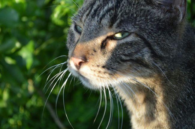 Una de mis favoritas Taking Photos Cat♡ Cats Of EyeEm cat eyes Canal De Panama  Gatos Street Photography Foto Callejera