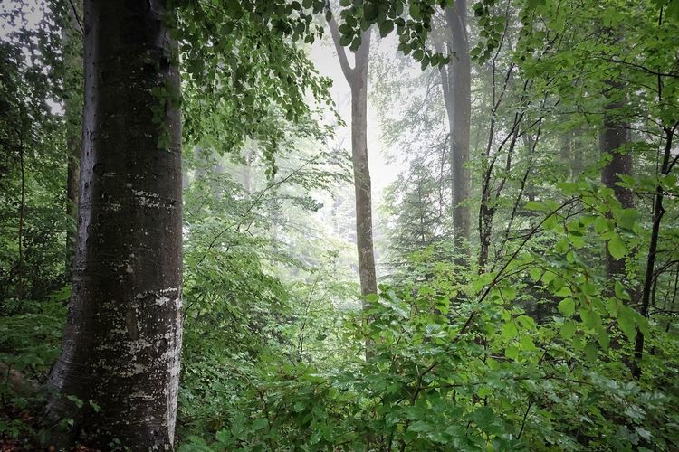 Photographer Photooftheday Photography Picoftheday Naturephotography Rainforest Rainforest Walks Tree Plant Growth Forest Tree Trunk Trunk Land Beauty In Nature No People Green Color Tranquility Nature Scenics - Nature Outdoors Non-urban Scene WoodLand Tranquil Scene