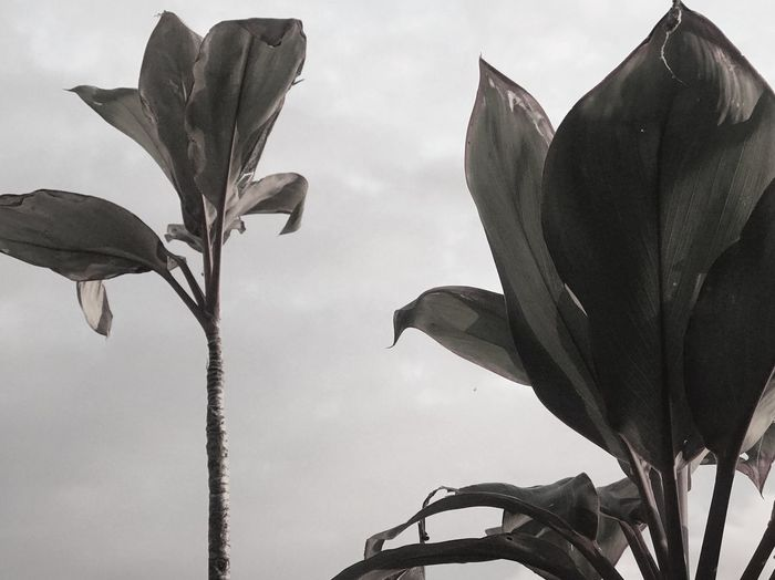 Growth Plant Nature Sky No People Low Angle View Leaf Plant Part Close-up Day Outdoors Cloud - Sky Freshness Beauty In Nature Fragility