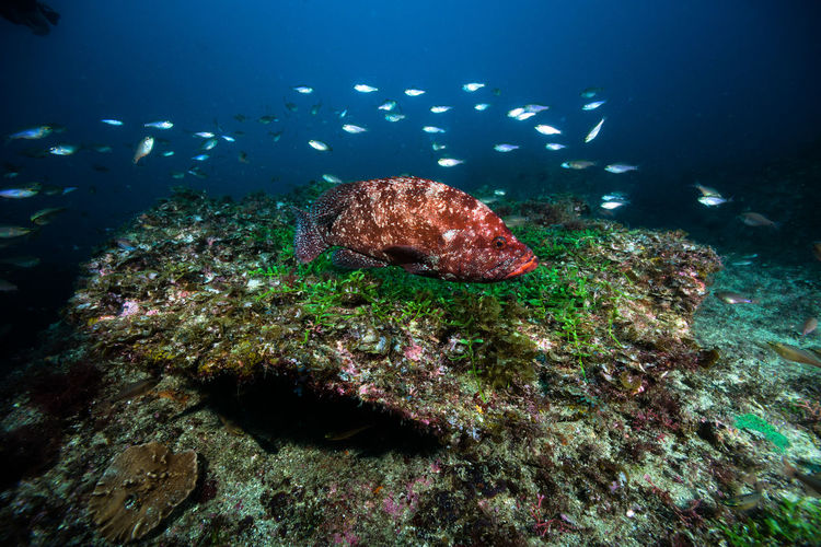 kushimoto Animal Themes Animal Wildlife Animals In The Wild Beauty In Nature Coral Day Fish Nature No People Outdoors Sea Sea Life Swimming UnderSea Underwater