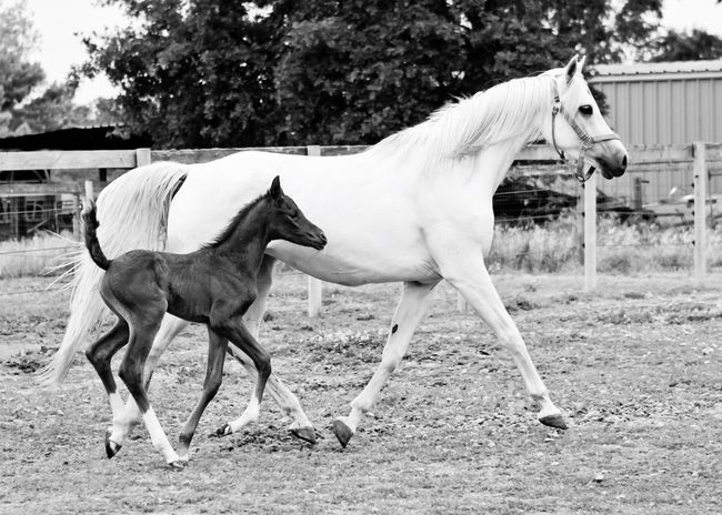 Blackandwhite Mama And Baby Horse Enjoying Life Running Horses Nature Photography Peaceful A Day In The Life Relaxing Time Animal Themes