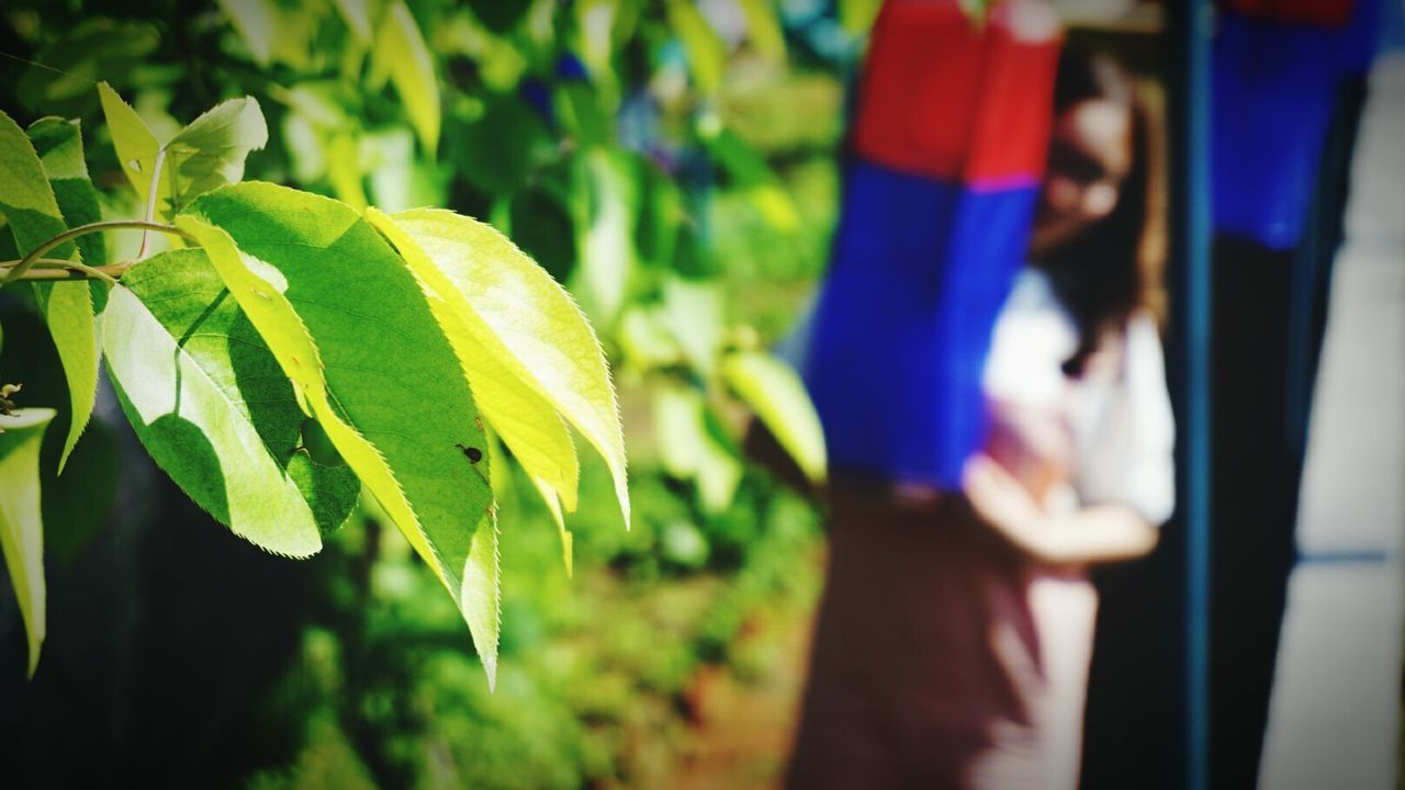 leaf, one person, growth, real people, focus on foreground, outdoors, day, women, green color, nature, close-up, plant, freshness, tree, human hand, people