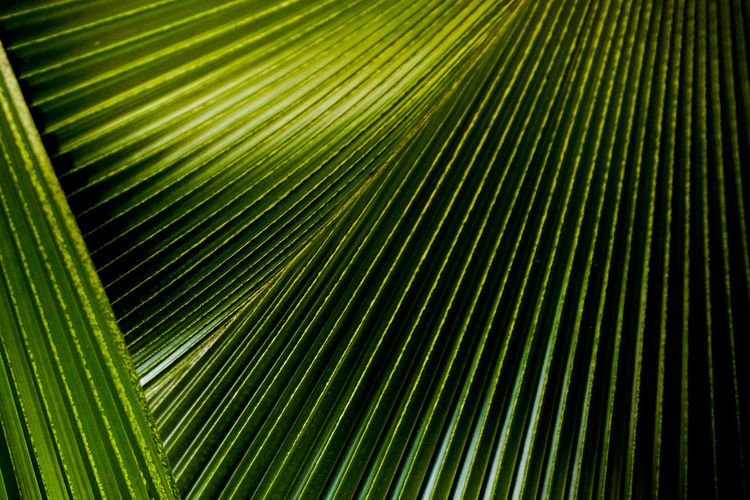 Backgrounds Close-up Day Freshness Full Frame Green Color Growth Leaf Nature No People Outdoors Palm Leaf